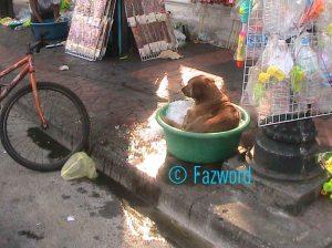 Saking Panasnya Bangkok LMAO
