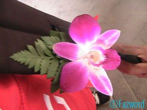 Welcome Flower in Siam Niramit | Doc: Fazword