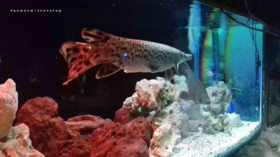 Fantastic Aquarium Jatim Park 2| photo: fazword